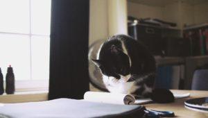Lezioni di SEO gatti
